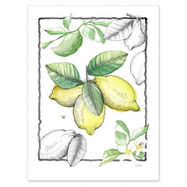 Lamina Yellow Parfume 2 - Ateleirwall